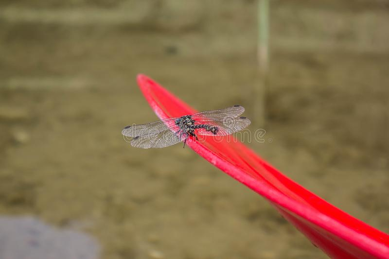 Canoe kayak on the river / Dragonfly on paddle royalty free stock photo