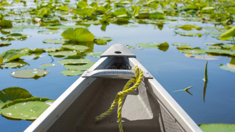 Canoe among lily pads. Tip of a canoe sailing among lily pads. Pelee point conservation area, Ontario, Canada royalty free stock image