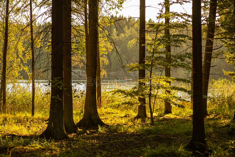 A canoe passing on a lake behind some trees stock images