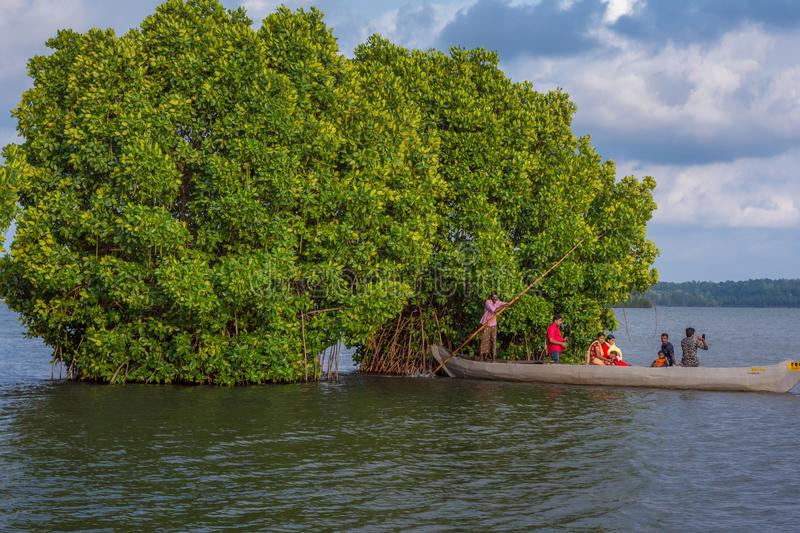 Canoe ride in between mangrove forest stock photos