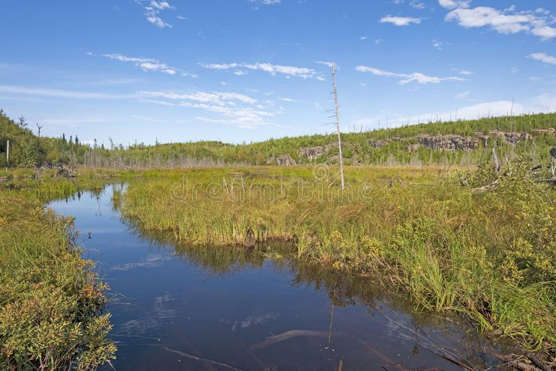 Canoe Trail Through a Bog stock afbeelding