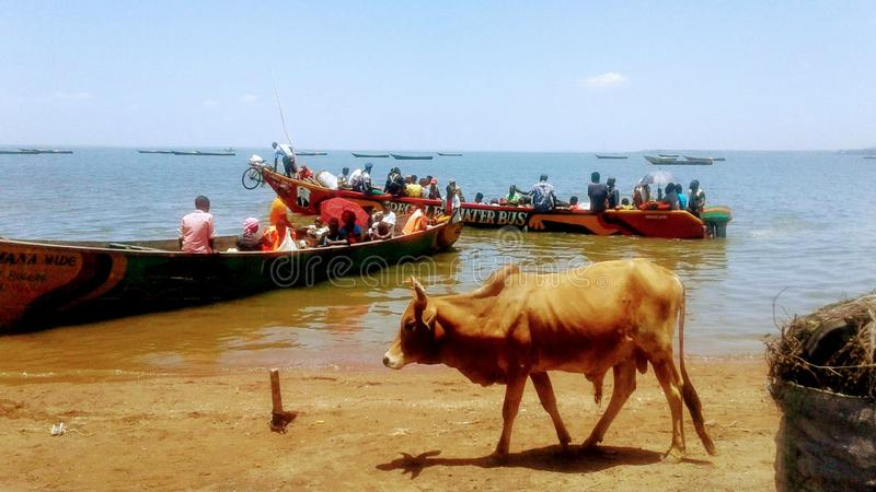 Canoe wooden boat Lake Transport on Lake Victoria  stock images