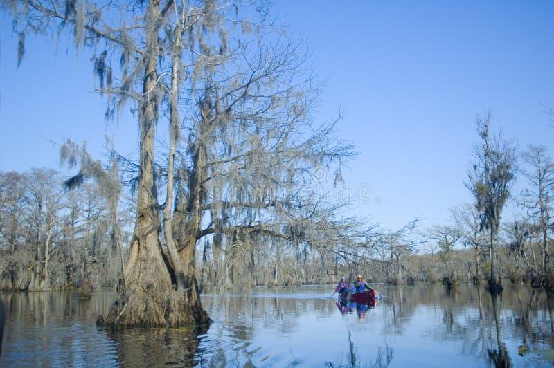 Canoeing auf dem sumpfigen Flussarm stockfotos