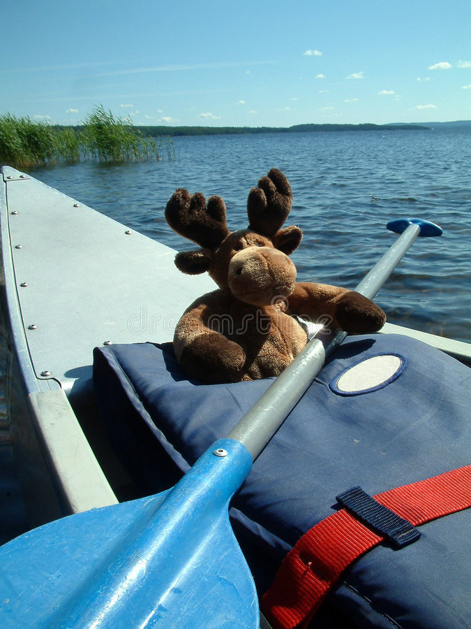 Canoeing moose stock photos
