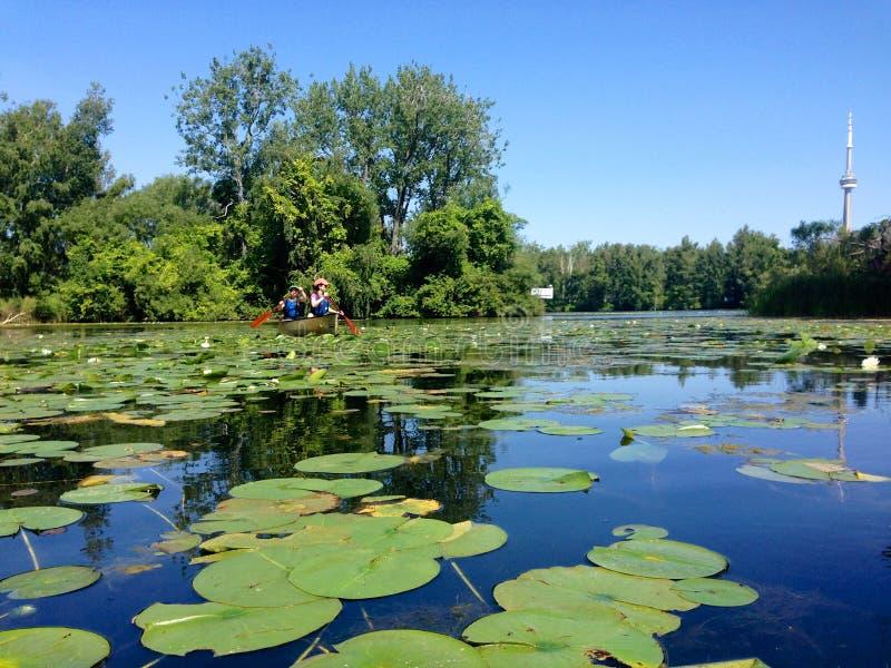 Canoers die in de eilanden van Toronto paddelen stock foto