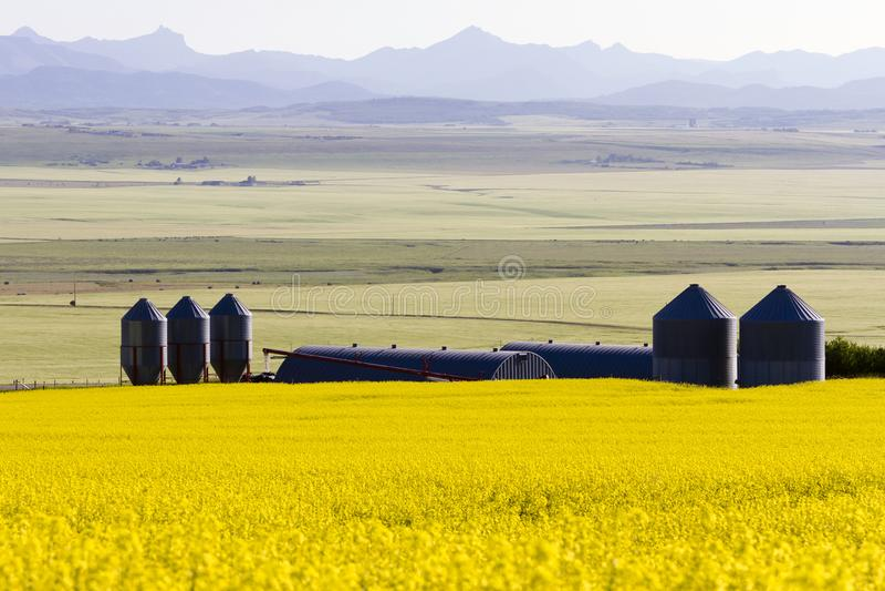 Canola Alberta do silo de grão imagens de stock royalty free