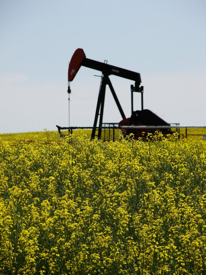 Download Canola Bio Fuel stock photo. Image of well, horsehead - 6032676
