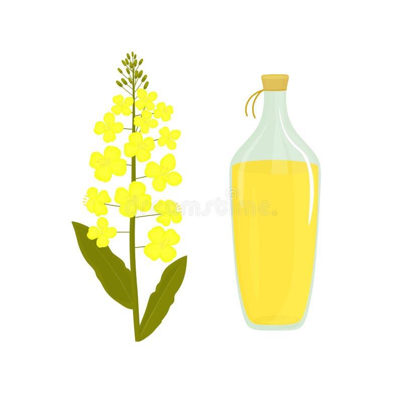 Canola blomma Flaska av rapsolja v?ldta v?xten vektor illustrationer
