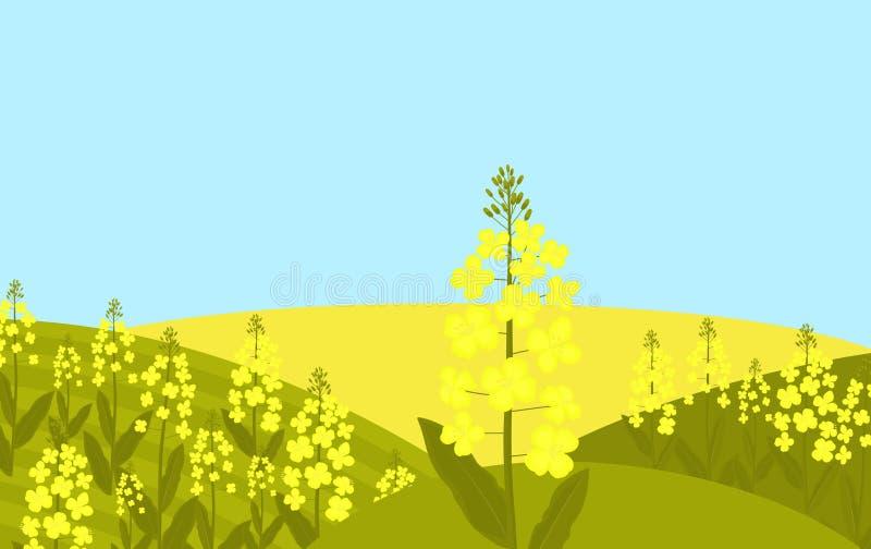 Canola blomma Rapsfröt växer i en äng vektor illustrationer