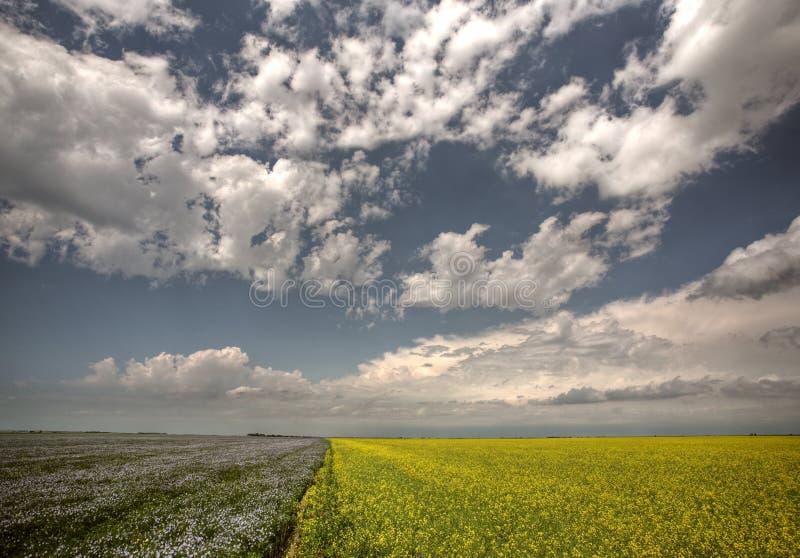 Canola et gisements de lin textile en Saskatchewan photos libres de droits