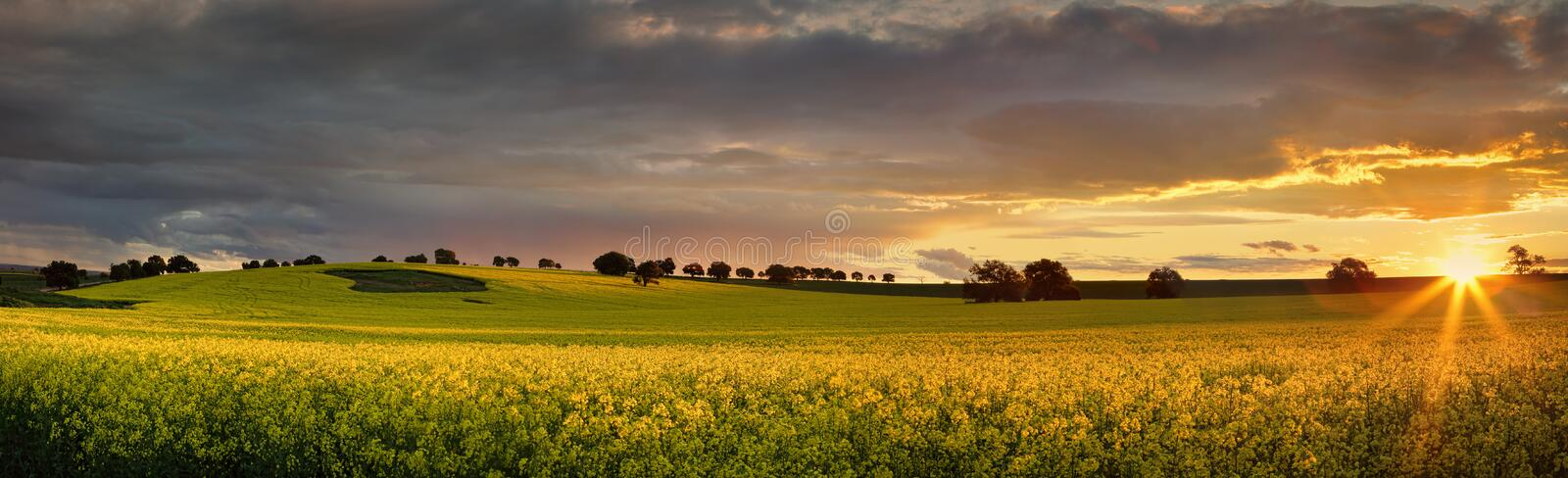 Canola farmlands as the sun sets. Canola farmlands in rural Central West of NSW at sunset, the last rays spread their warm light on the golden canols. Panorama stock photo