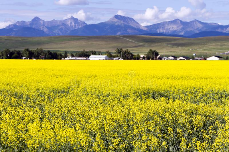Surrounded By Canoloa Feilds Quotes: Pincher Creek Alberta Stock Photo. Image Of Mountains