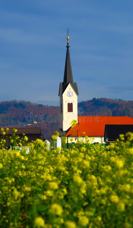 Canola Field In Autumn. Countryside background with blooming canola field in autumn and church of St. John in Village of Starše, Slovenia royalty free stock images