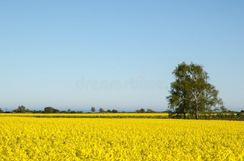 Download Canola Fields Landscape Stock Photo - Image: 40780543