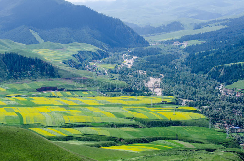 Surrounded By Canoloa Feilds Quotes: Canola Flower Field Stock Photo. Image Of Qinghai, Travel