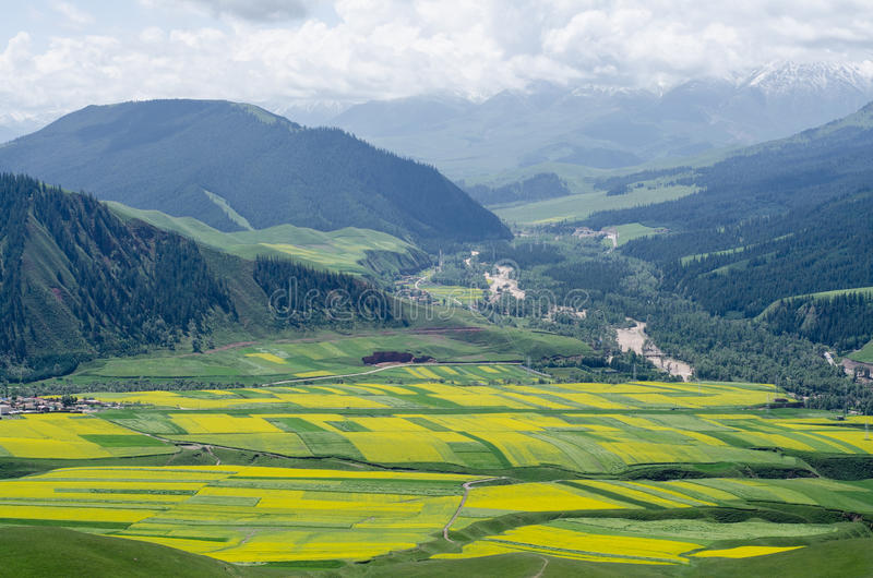 Surrounded By Canoloa Feilds Quotes: Canola Flower Field Stock Photo. Image Of China, River