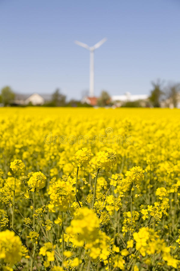 Download Canola flowers.JH fotografering för bildbyråer. Bild av natur - 37345251