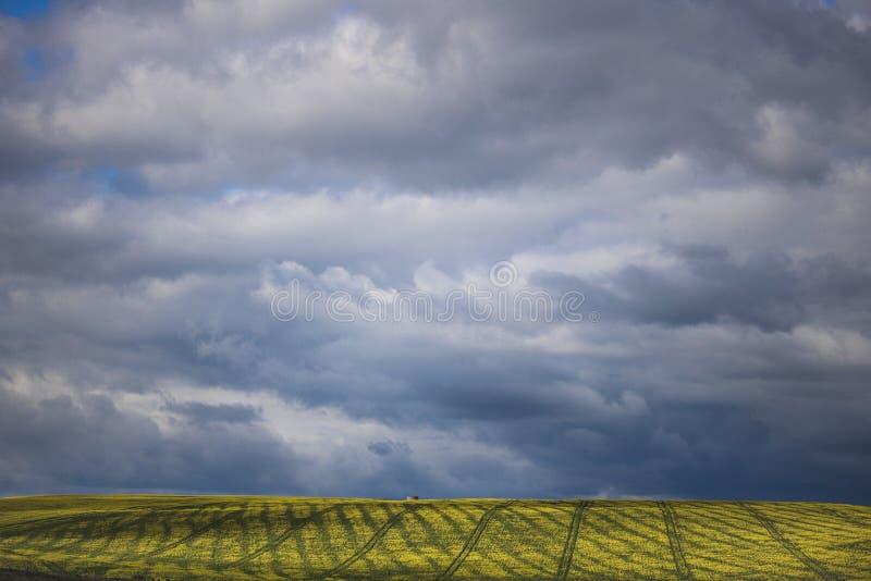 Canola kwiatu pole na gospodarstwie rolnym w Caledon, Zachodni przylądek, Południowa Afryka zdjęcie stock