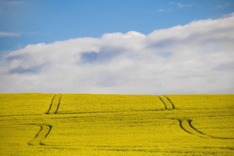 Canola kwiatu pole na gospodarstwie rolnym w Caledon, Zachodni przylądek, Południowa Afryka obrazy royalty free