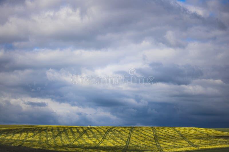 Canola kwiatu pole na gospodarstwie rolnym w Caledon, Zachodni przylądek, Południowa Afryka zdjęcie royalty free