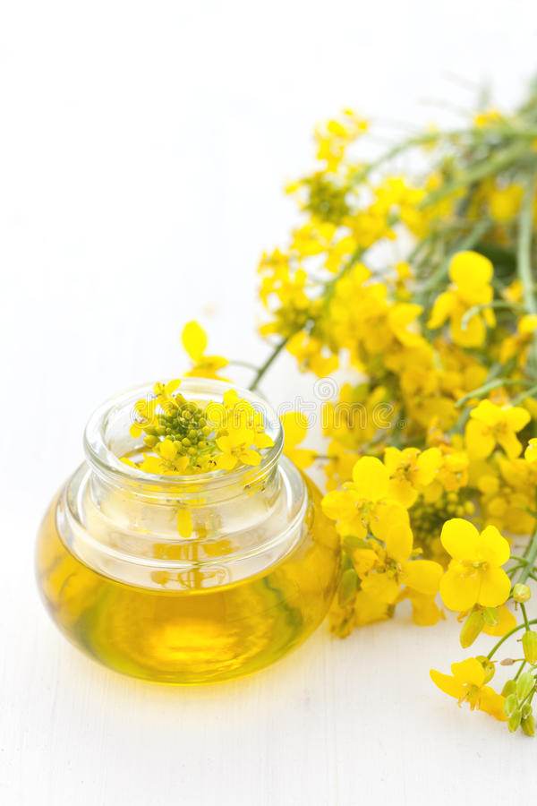 Canola oil stock photos