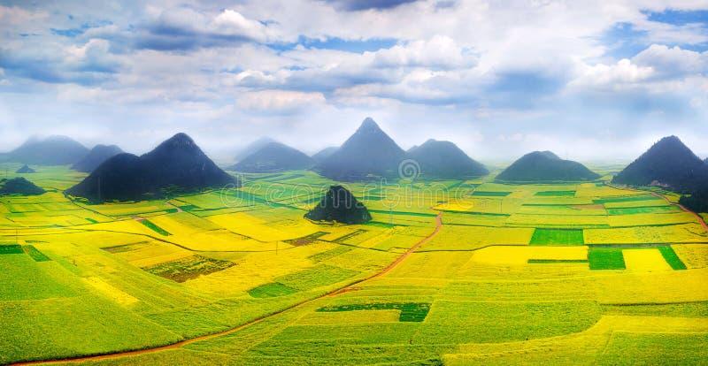 Canola pole, rapeseed kwiatu pole z ranek mgłą w Luoping obrazy stock