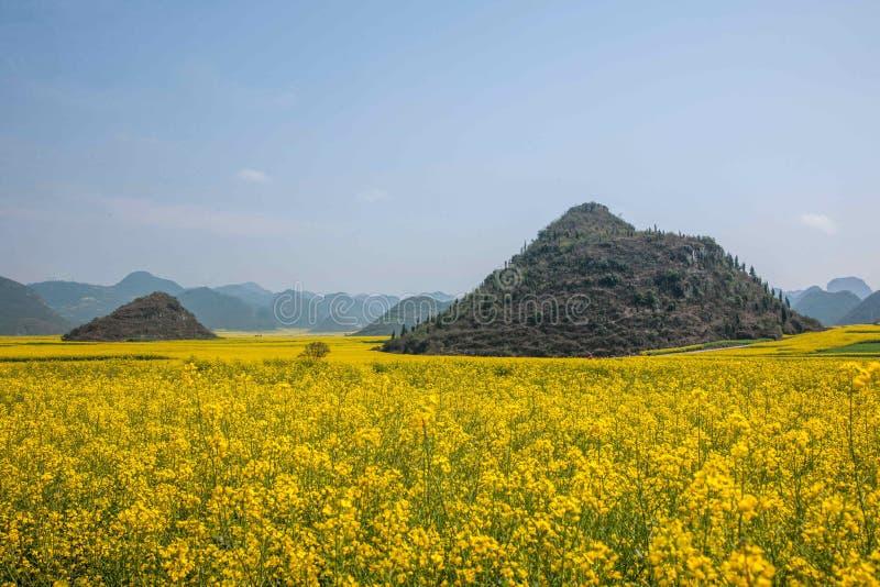Canolablume Yunnans Luoping auf einem kleinen Flecken von Blumen Bazi lizenzfreie stockbilder