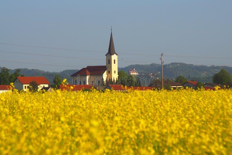 Canolafält i våren, Slovenien arkivfoto