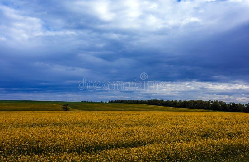 Canolafält, landskap på en bakgrund av moln Canolabiobränsle arkivfoton