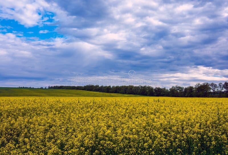 Canolafält, landskap på en bakgrund av moln Canolabiofue arkivfoton