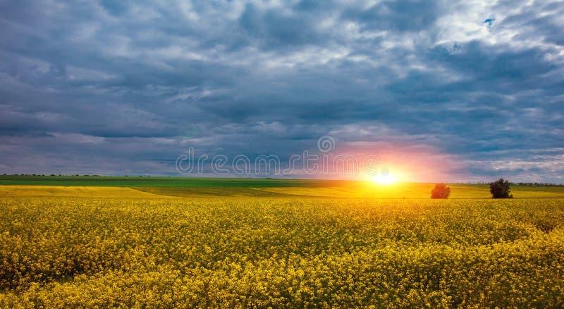Canolafält, landskap på solnedgången Canolabiobränsle royaltyfri fotografi