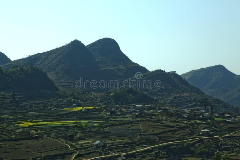 Canolagebied in vallei stock fotografie