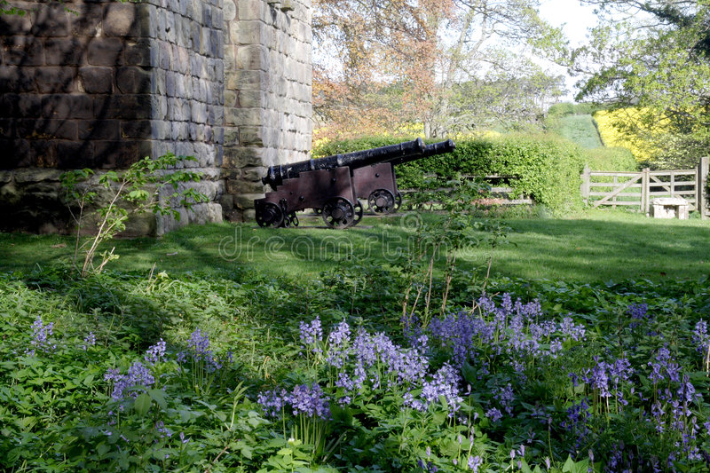 Canons et Bluebells photos stock