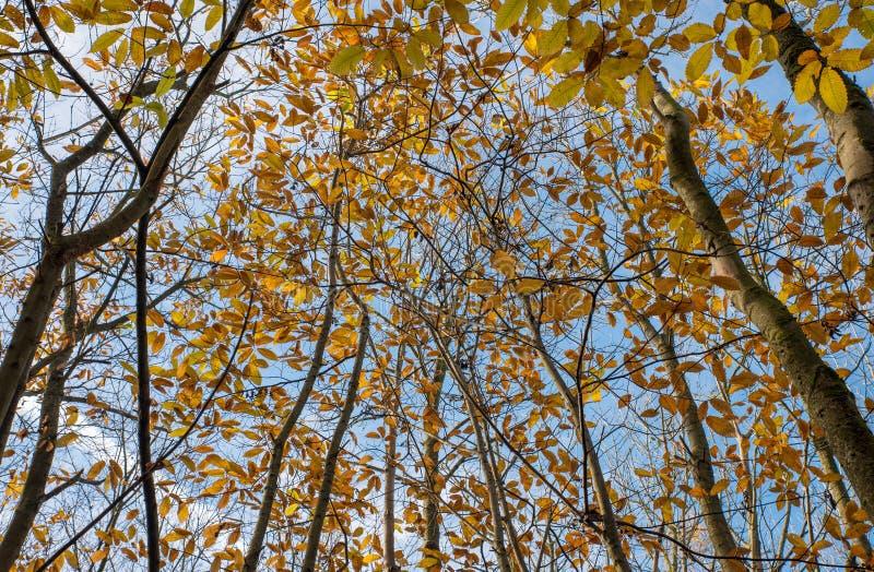 Canopa ad albero automatico colorata immagine stock