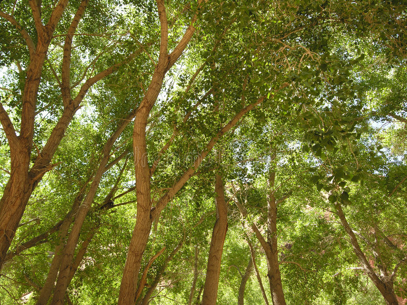 Canopy royalty free stock photography