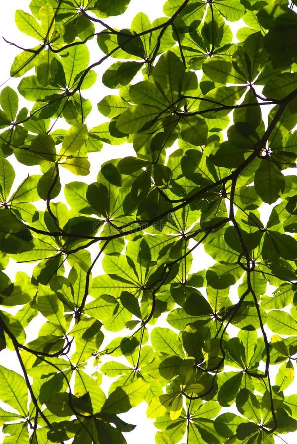 Download Canopy stock image. Image of illumination, echo, tree - 6533077