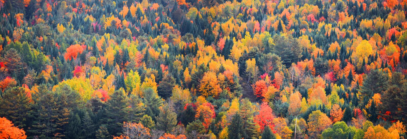 Canopy of Autumn trees in Rural Vermont royalty free stock photography
