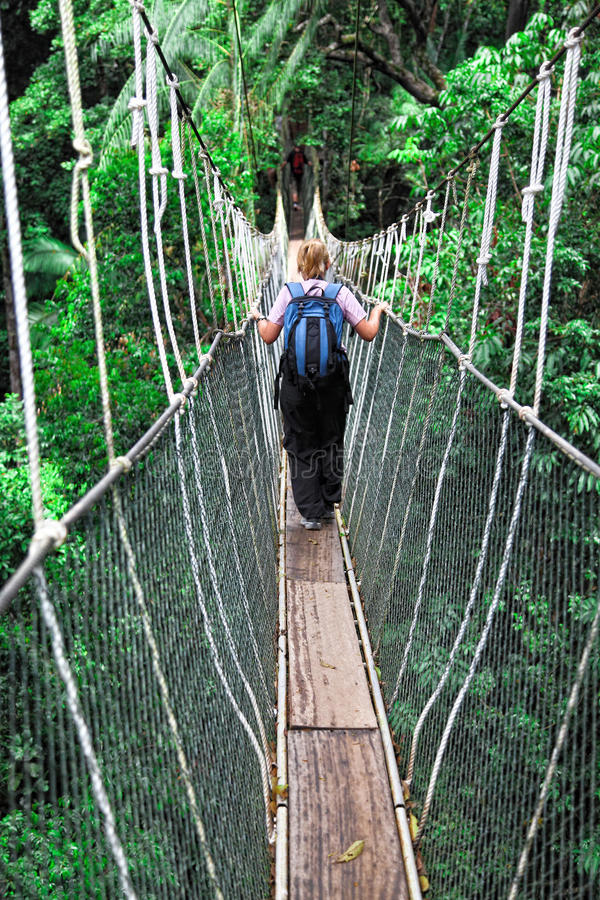 Download Canopy bridge stock image. Image of canopy, green, high - 21047135