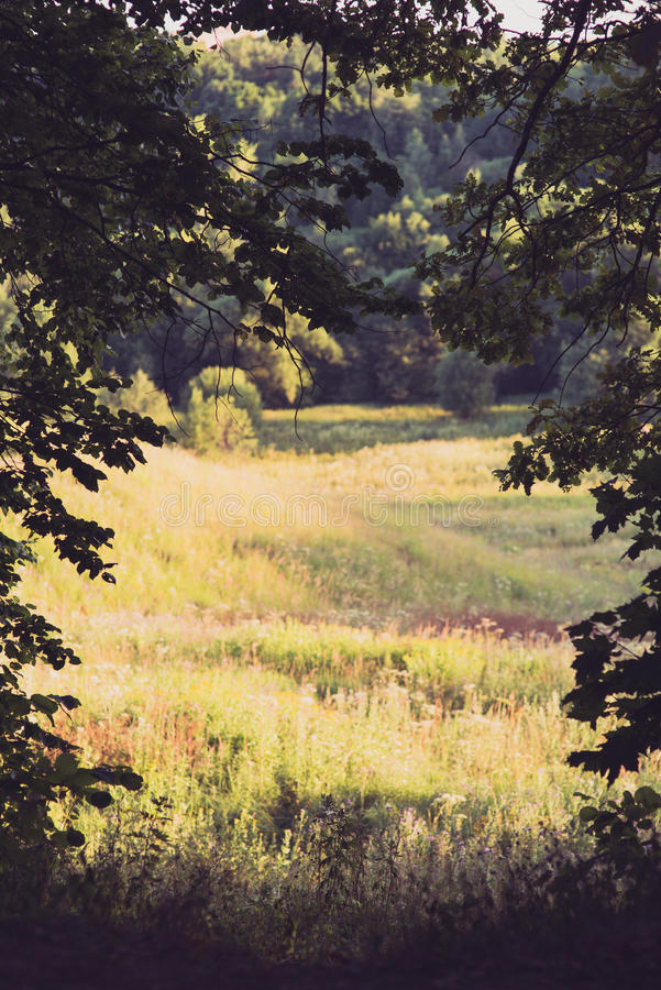 The canopy of tall trees framing a summer sunny meadow, with the sun shining through royalty free stock photos