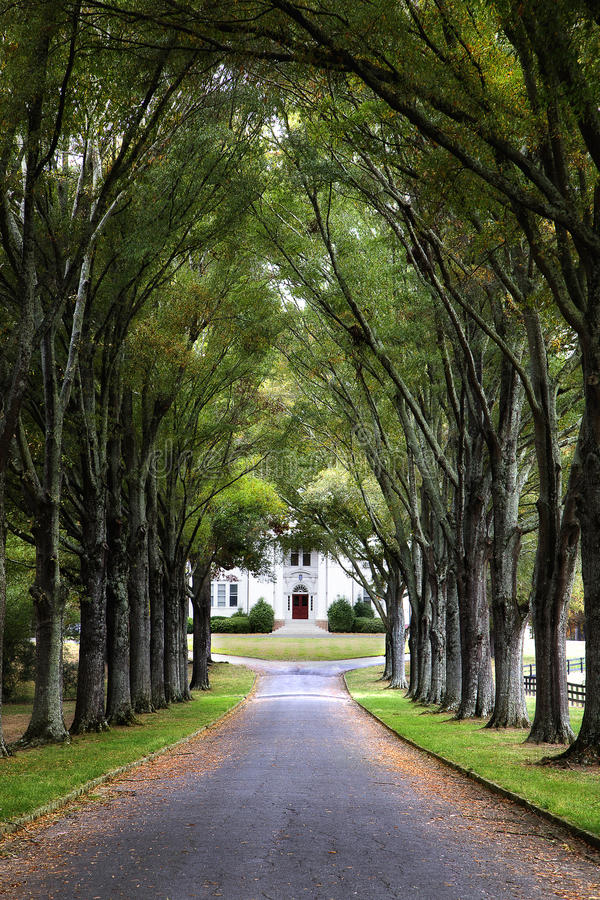 Download Canopy Of Trees Over Road To Historic Home Stock Image - Image of morning & Canopy Of Trees Over Road To Historic Home Stock Image - Image of ...