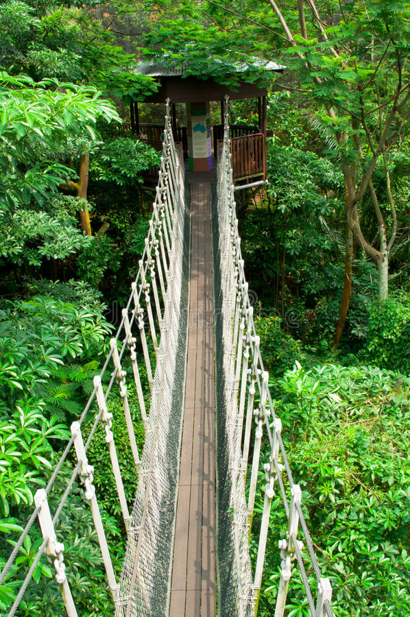 Free Canopy Walk Stock Images - 19773524