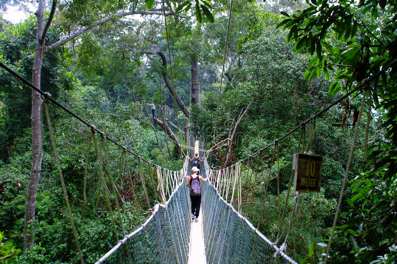Download Canopy walk stock photo. Image of jungle, malaysia, path - 3416458