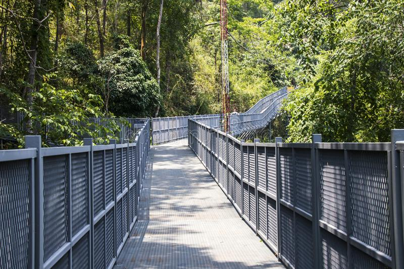 Canopy walks at Queen sirikit botanic garden Chiang Mai, Thailand royalty free stock images
