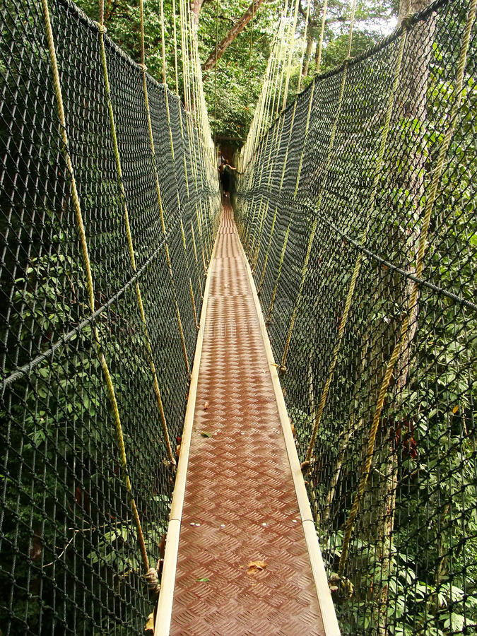 Download Canopy Walkway Taman Negara Malaysia Stock Photo - Image of tree adventure & Canopy Walkway Taman Negara Malaysia Stock Photo - Image of tree ...