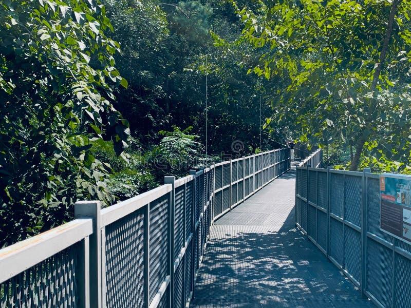 Canopy walkway,Thailands längsta treetop walkway royaltyfria foton
