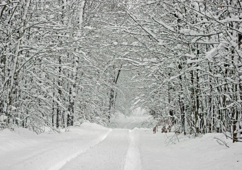 canopyen räknade snowtreen royaltyfria foton