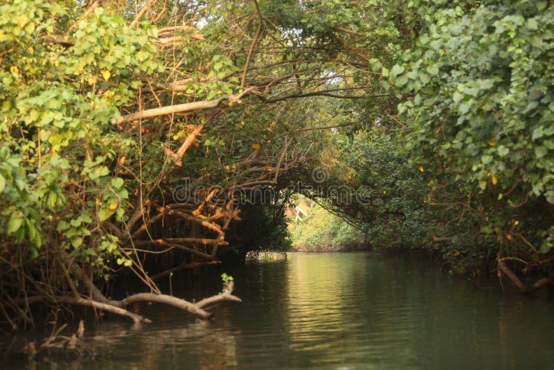 Canotaje en el centro de árboles fotos de archivo