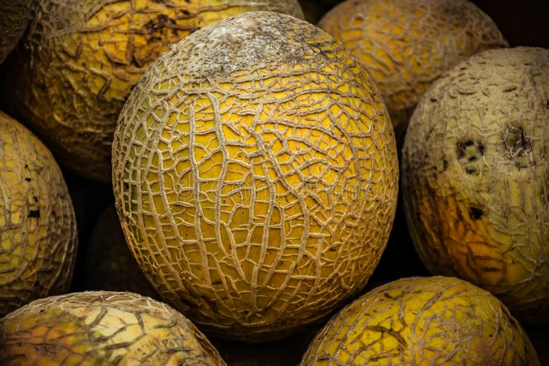 Cantaloup cultivé sur place photos stock
