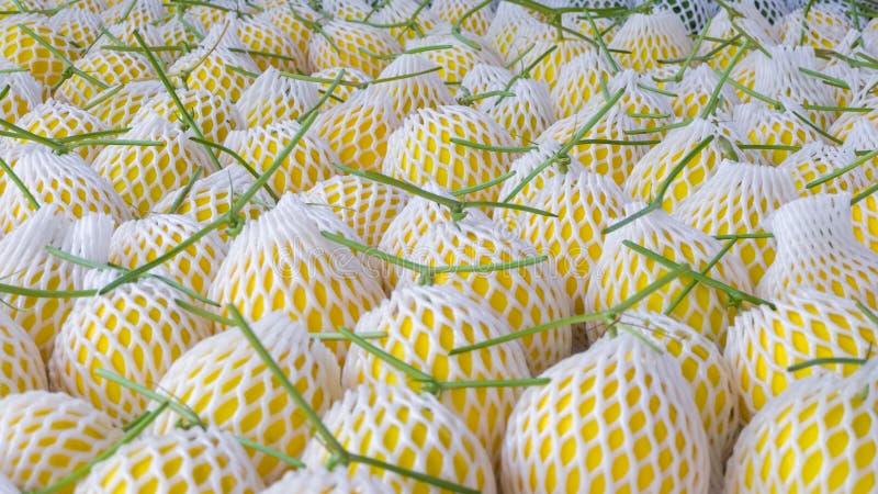 Cantaloup jaune photos stock
