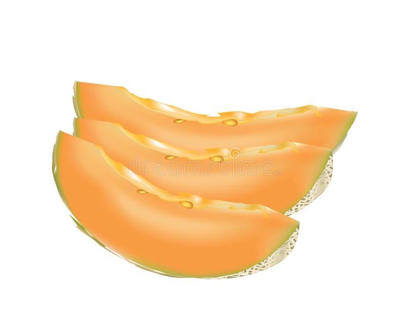 Cantaloup - melon illustration libre de droits